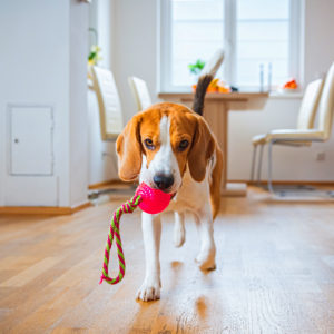 Dog with ball and rope