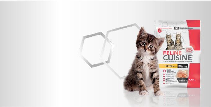 Smart Kittens